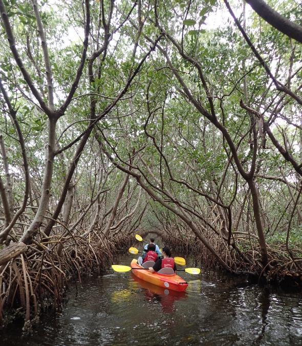 Rentals Sweetwater Kayaks